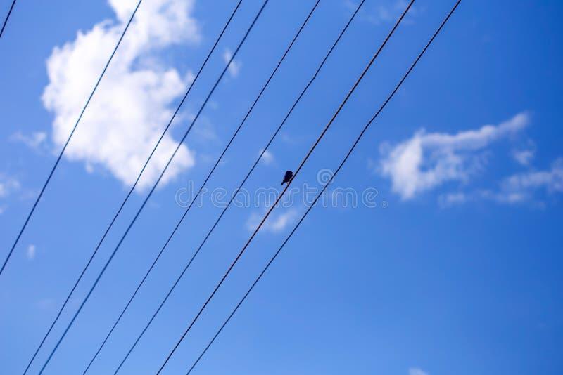 Ein Vogel, der auf dem Draht sitzt lizenzfreies stockbild