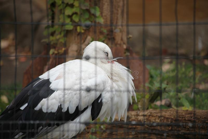 Ein Vogel im Käfig lizenzfreies stockbild