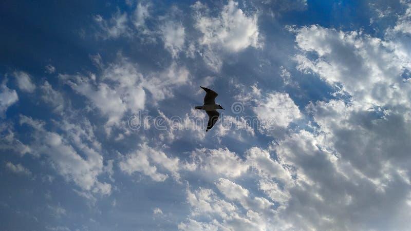 Ein Vogelfliegen in himmelhohem lizenzfreie stockbilder