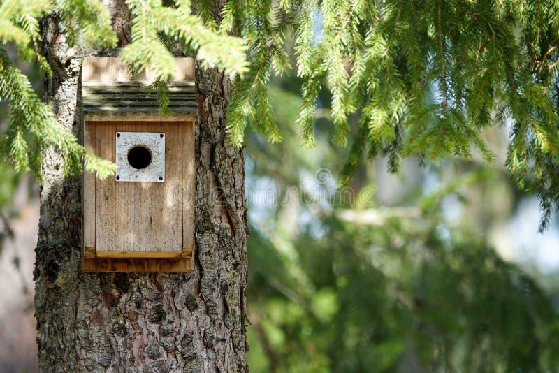 Ein Vogelhaus/-höhle unter Niederlassungen lizenzfreie stockbilder