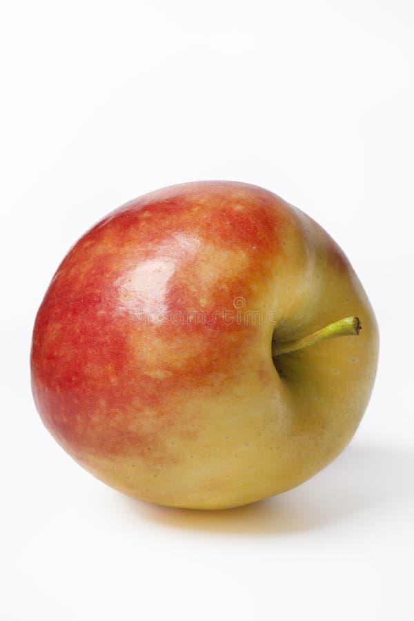 Ein vollständiger Elstar Apfel lizenzfreies stockfoto