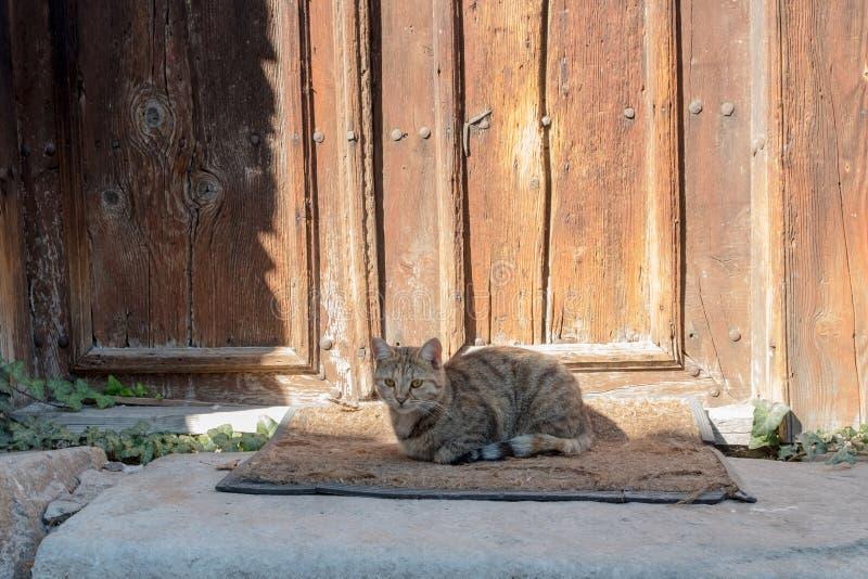 Ein von Plowdiw, Bulgariens schöne Katzen sitzt auf einer Matte lizenzfreie stockbilder