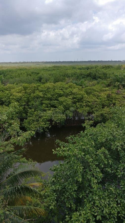 Ein Wald lizenzfreie stockbilder
