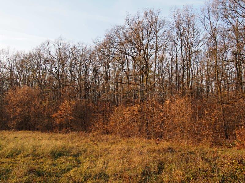 Ein Wald im Herbst stockbild