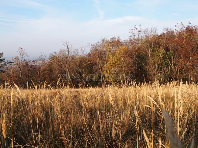 Ein Wald im Herbst stockfotos