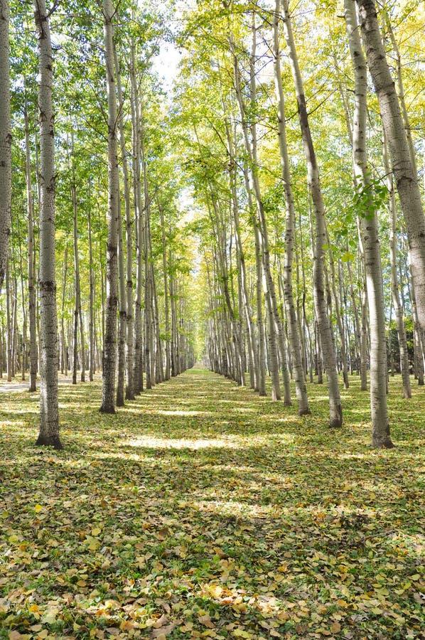 Ein Wald zeichnete den Weg, der durch gefallene Blätter im Herbst bedeckt wurde stockbild