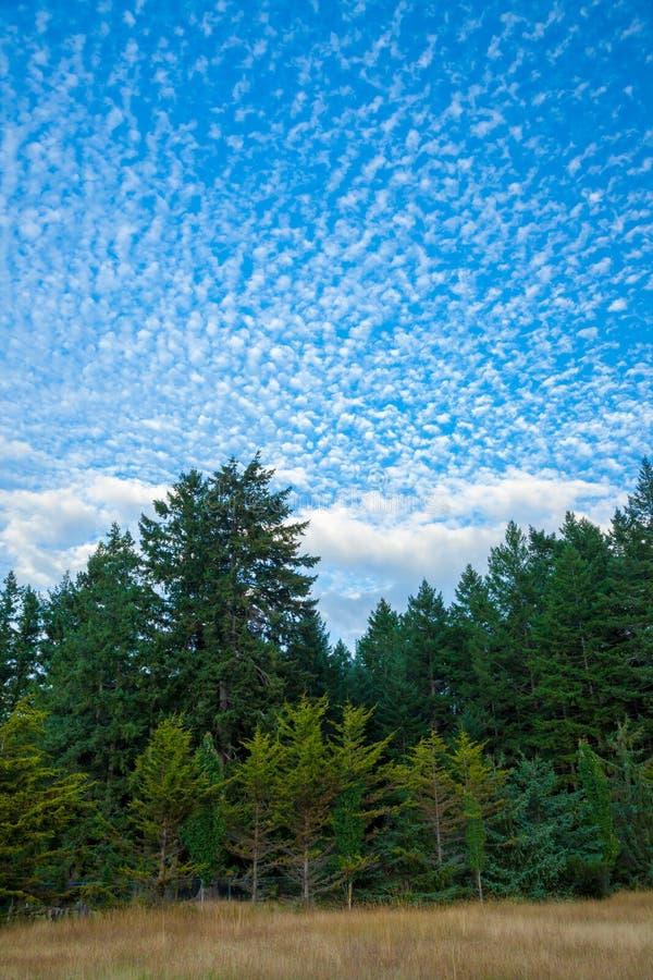 Ein Waldhintergrund mit einem interessanten Himmel stockfotos