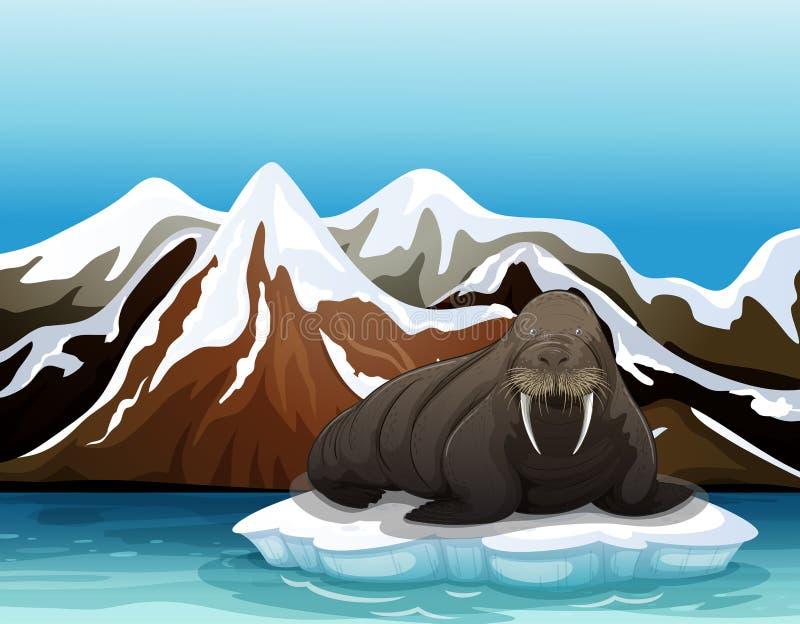 Ein Walroß stock abbildung