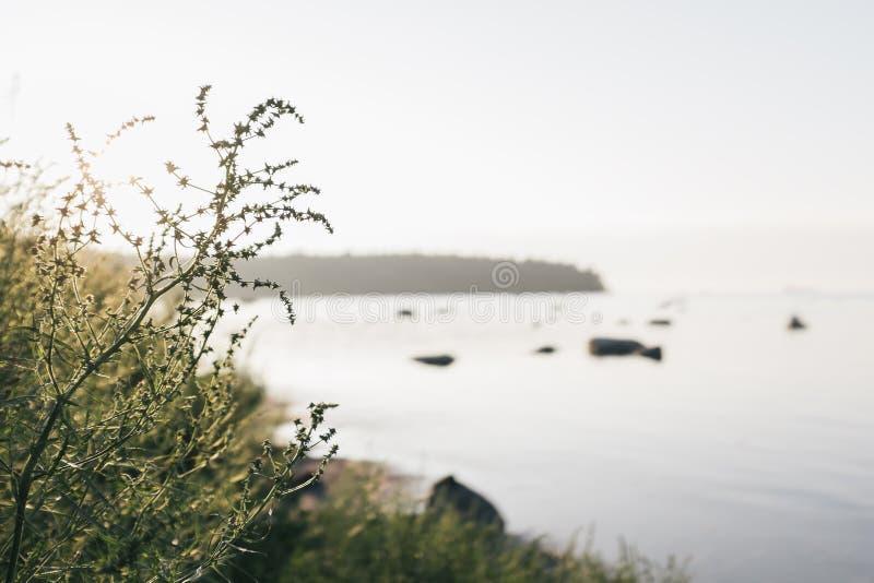Ein warmer Sommerabend durch die Küste in Viimsi, Estland lizenzfreie stockfotos