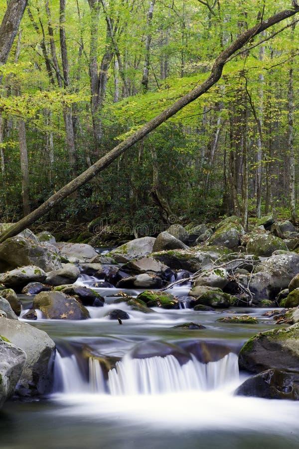 Ein Wasserfall im rauchiger Gebirgsnationalpark stockbild