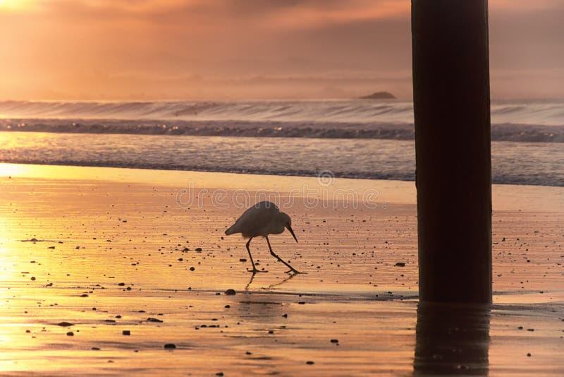 Ein Weg auf dem Strand lizenzfreie stockfotografie