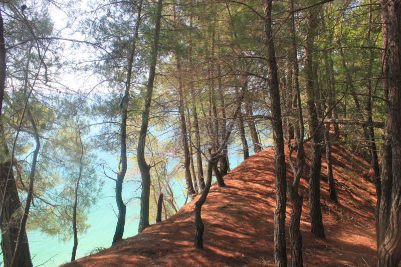 Ein Weg in der Reserve entlang der Klippe lizenzfreies stockbild