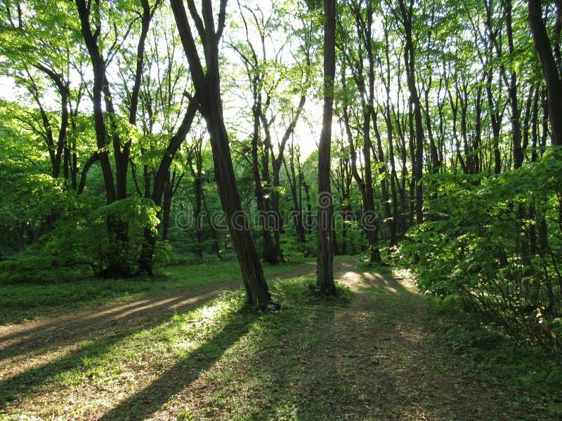 Ein Weg durch den Wald mit Sonnenlicht zwischen Bäumen stockbild