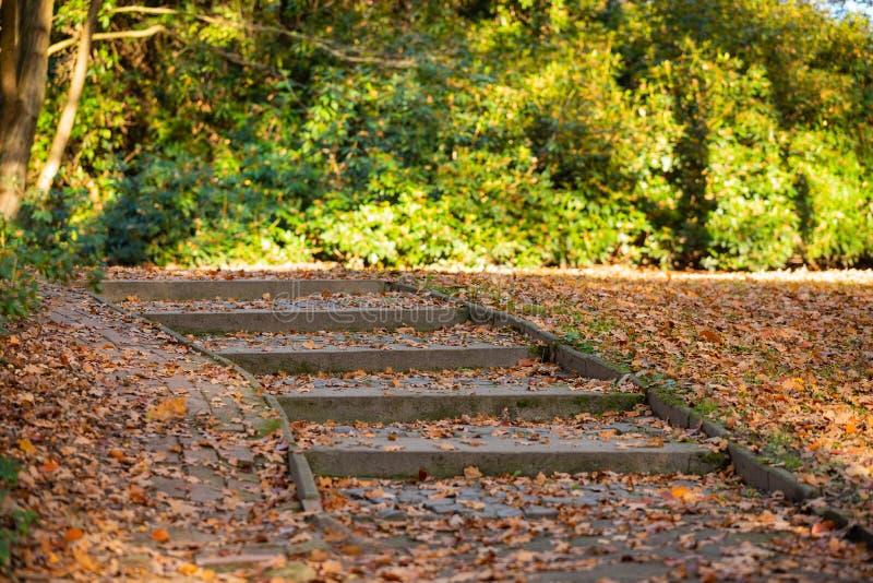 Ein Weg durch einen Herbstwald stockbild