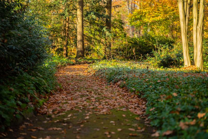 Ein Weg durch einen Herbstwald stockfoto