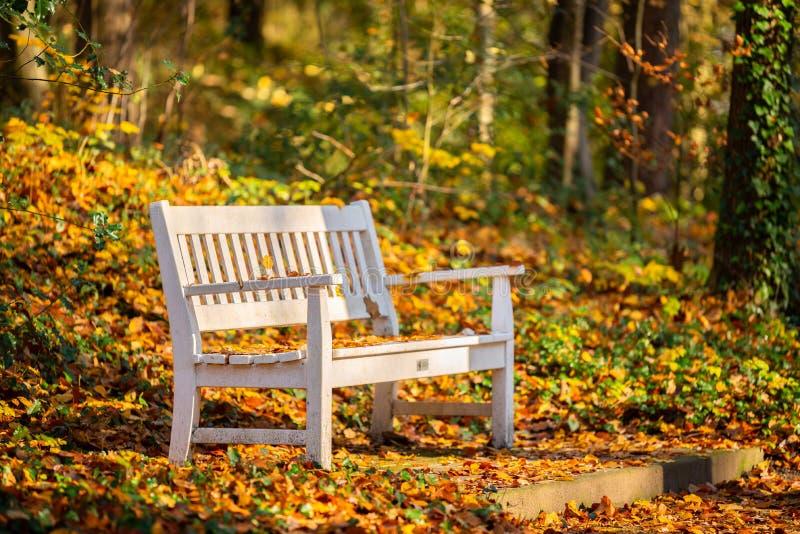 Ein Weg durch einen Herbstwald lizenzfreie stockfotos