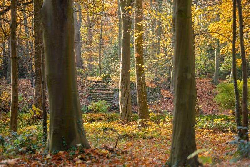 Ein Weg durch einen Herbstwald stockfotografie