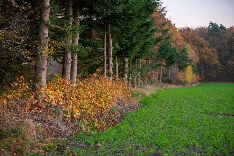 Ein Weg durch einen Herbstwald stockbilder