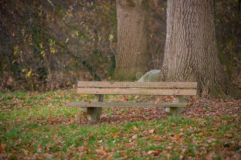 Ein Weg durch einen Herbstwald lizenzfreie stockfotografie