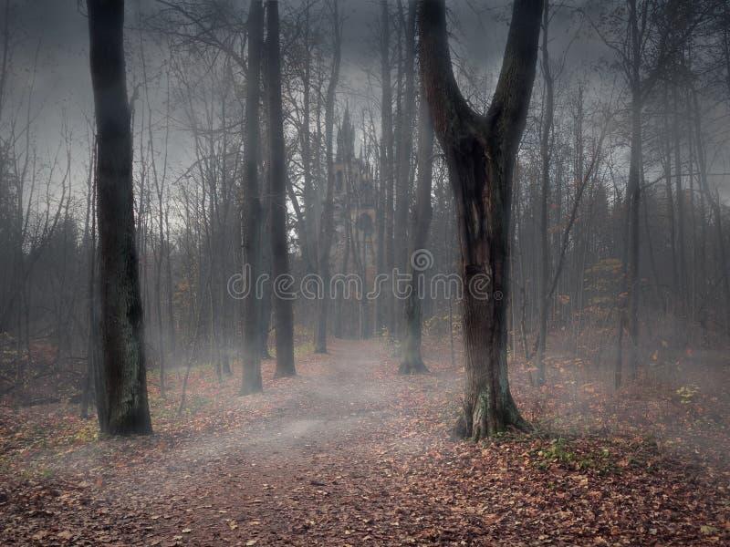 Ein Weg durch einen mystischen nebelhaften Wald lizenzfreie stockfotos