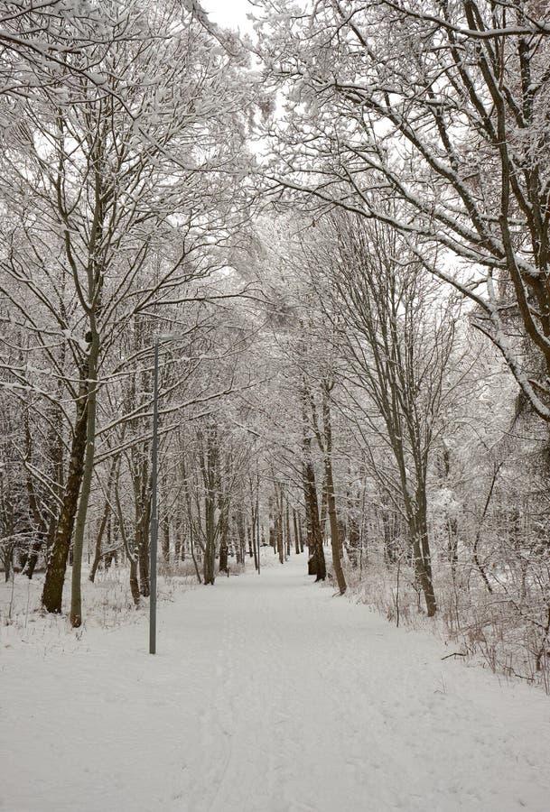 Ein Weg durch einen schneebedeckten Wald im Winter stockfotos