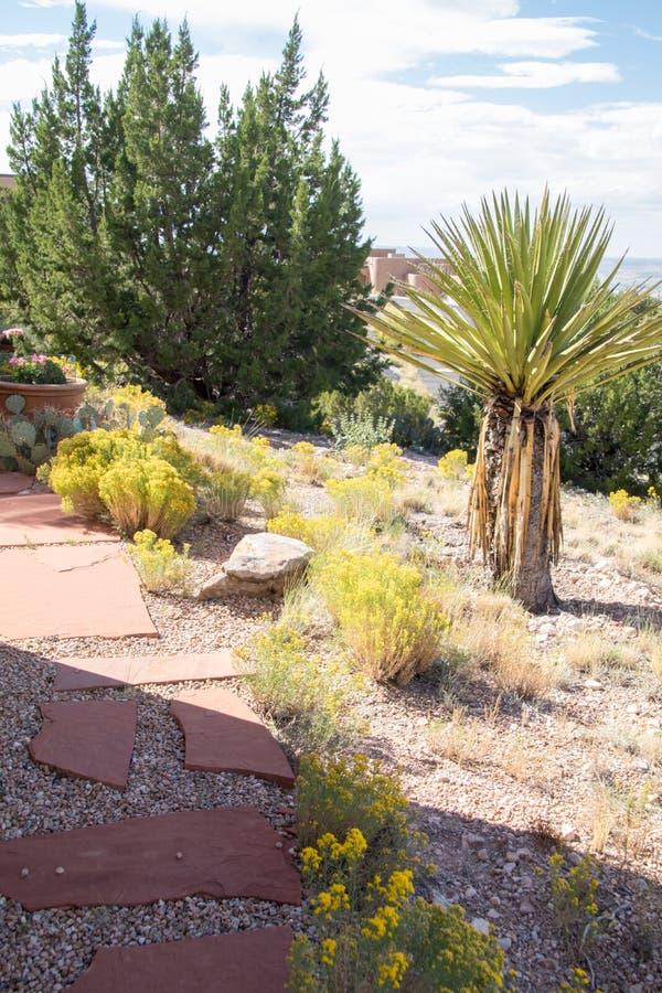 Ein Weg durch verschiedenen Kaktus in Richtung zu einem Haus stockfoto