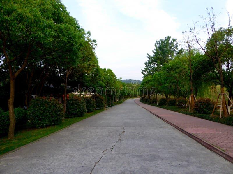 Ein Weg durch zwei Baumreihen stockfotos