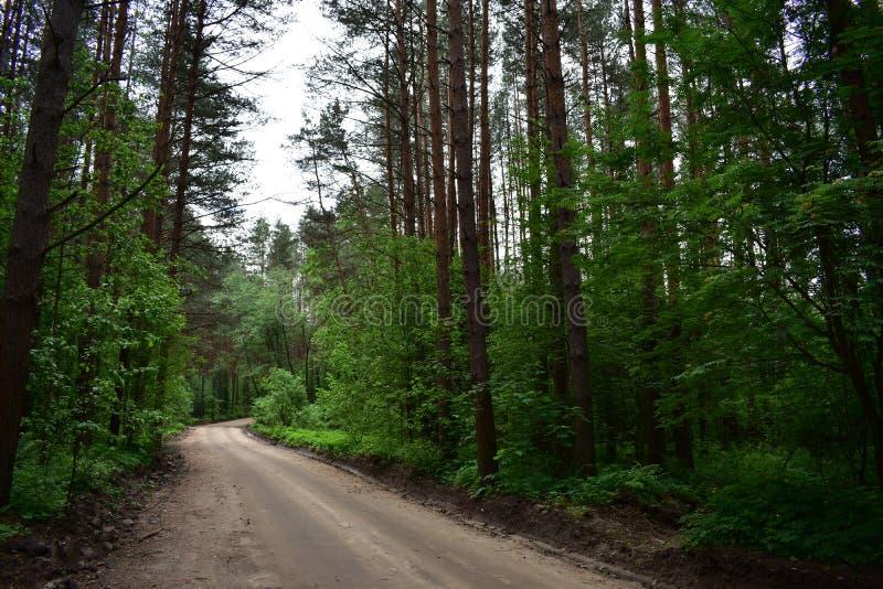 Ein Weg in einem Kiefernwald lädt Sie mit positiven Gefühlen auf stockfotografie
