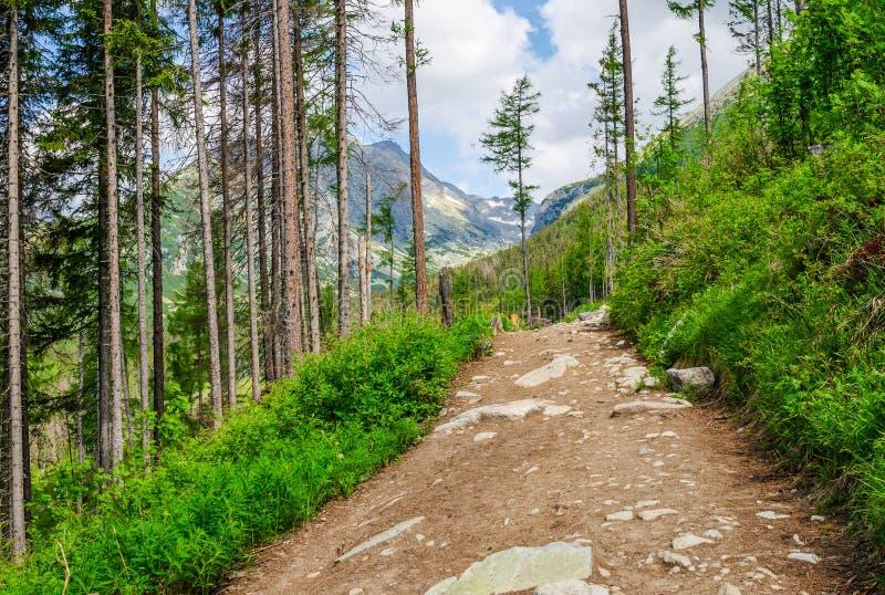 Ein Weg in einem Wald in den Tatra-Bergen in Slowakei europa stockfoto