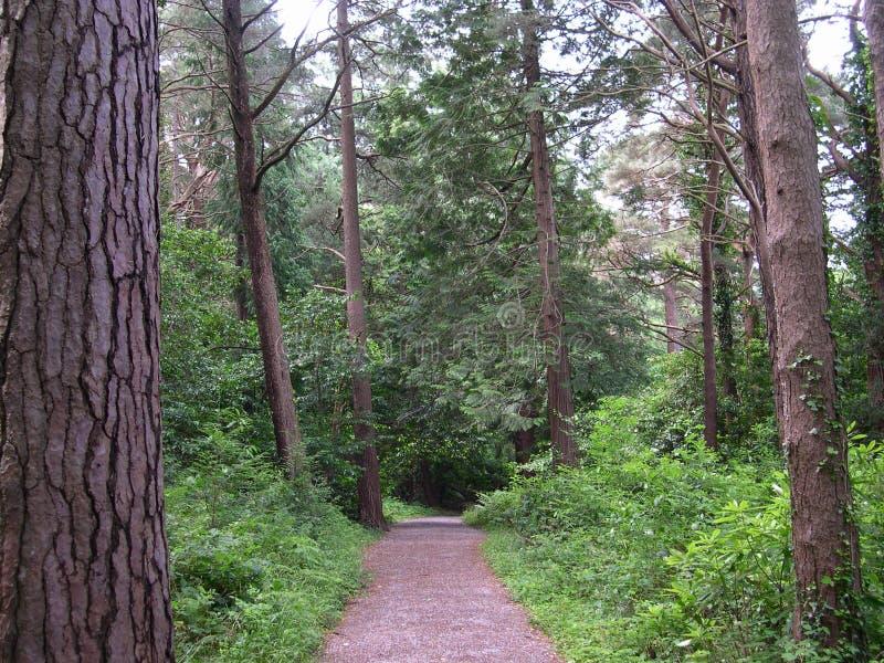 Ein Weg im Holz stockfotografie
