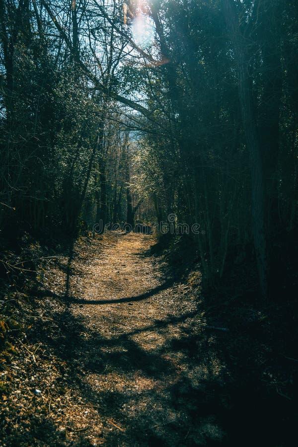Ein Weg tief im Wald stockfotos