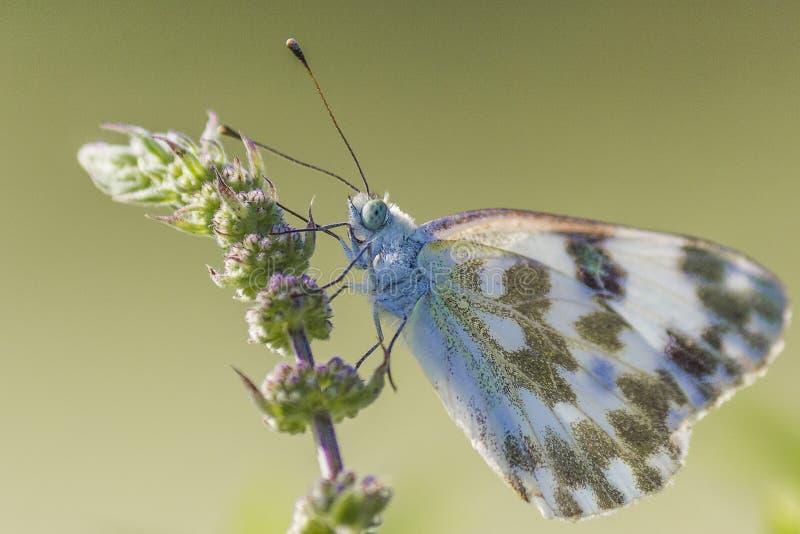 Ein weißer Schmetterling, der auf einer Anlage stillsteht lizenzfreie stockbilder