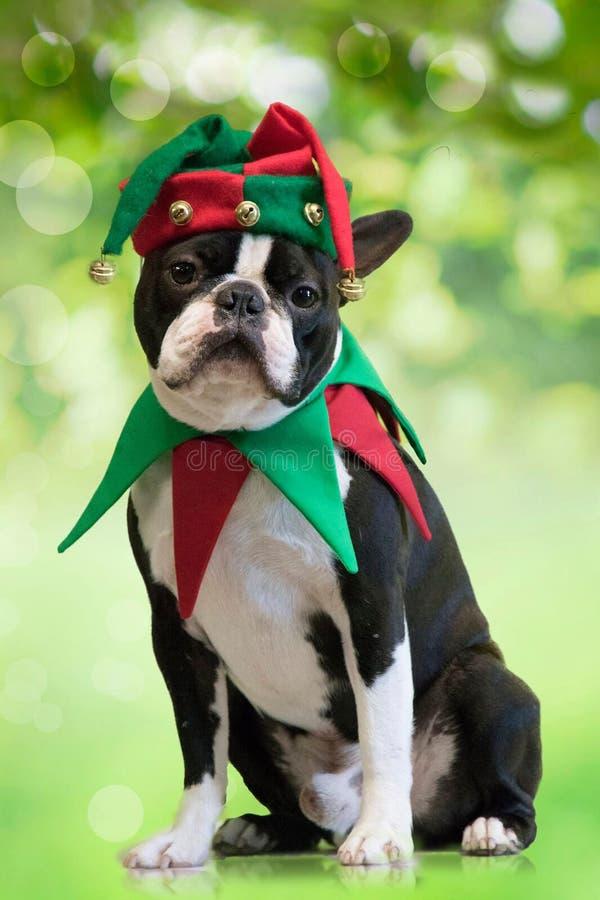 Ein Weihnachtshund stockbild