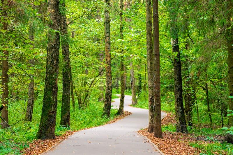 Ein Wicklungsasphaltweg im Stadtpark lizenzfreie stockfotografie