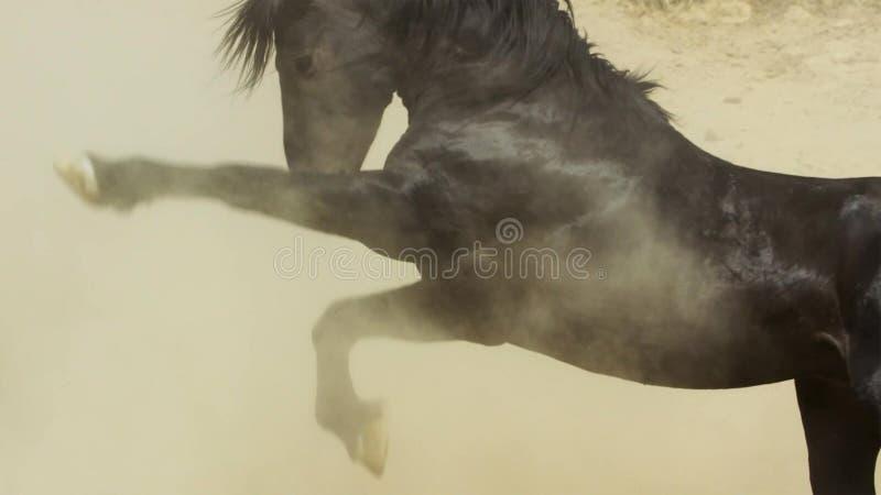 Ein wilder Buchtmustang der wildes Pferdeherde Onaquai In der Wüste von Nevada stoisch stehen, Vereinigte Staaten lizenzfreie stockfotografie