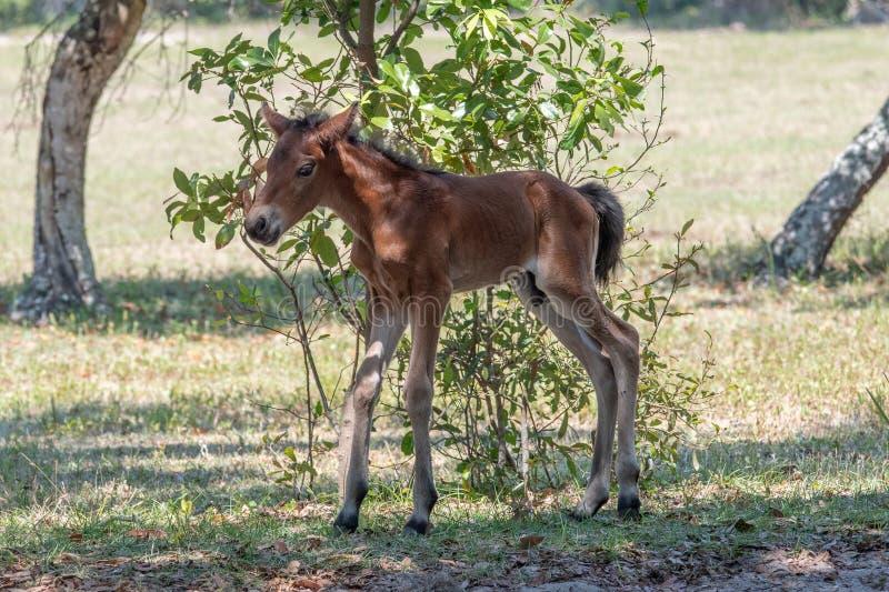 Ein wilder neugeborener Colt lizenzfreie stockfotografie