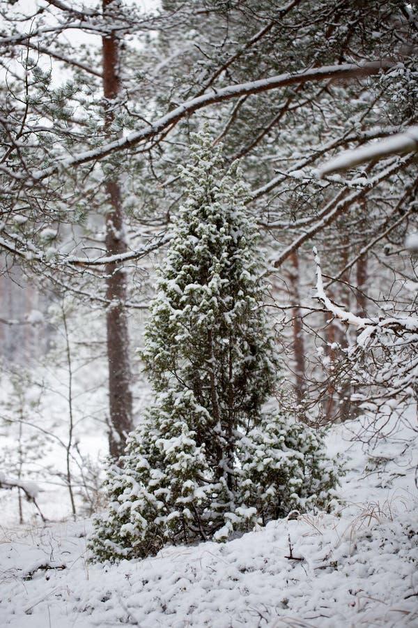 Ein Winterwald lizenzfreie stockfotos