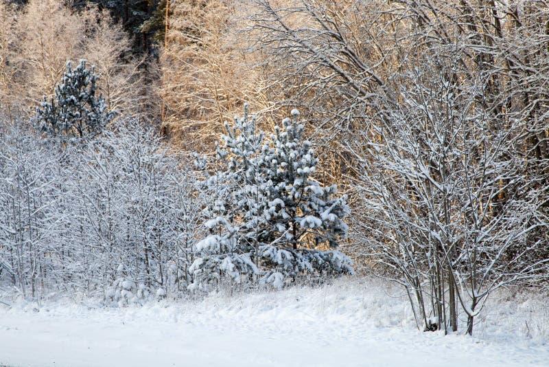 Ein Winterwald stockbilder