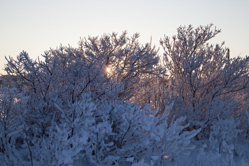 Ein Winterwald stockbild