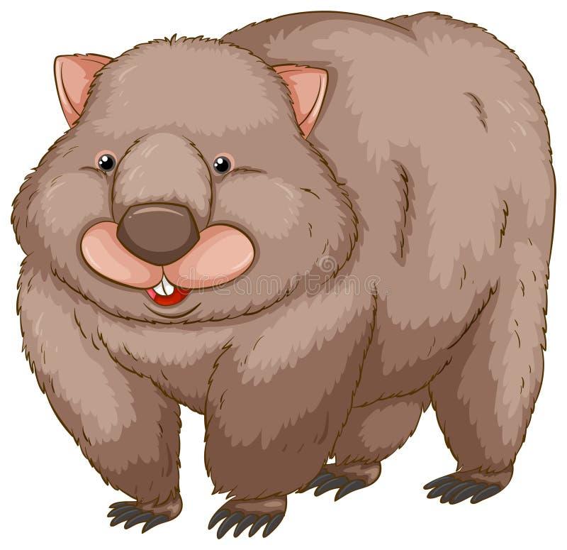 Ein Wombat stock abbildung