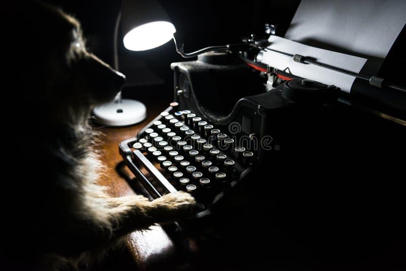 Ein Yorkshire-Hund schreibt auf eine alte Schreibmaschine lizenzfreies stockfoto