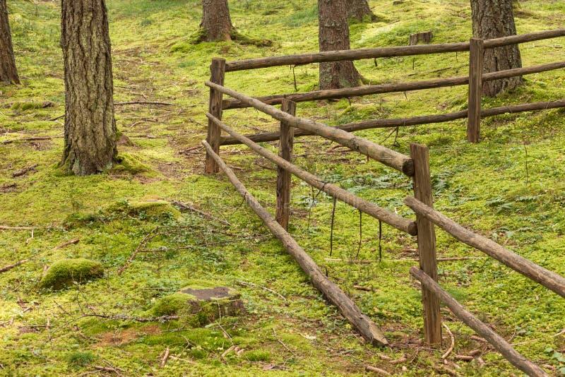 Ein Zaun innerhalb eines typischen Waldes der italienischen Alpen lang ein Gebirgsweg stockfotos