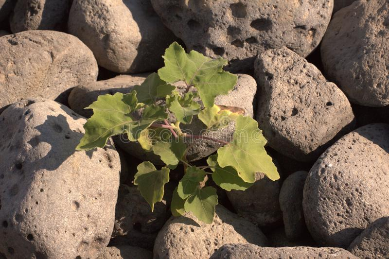 Ein Zierpflanzenbau vom Stein lizenzfreie stockfotografie
