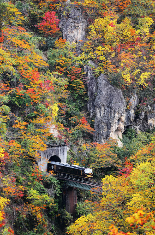 Ein Zug, der aus einen Tunnel auf eine Brücke über Naruko-Schlucht mit buntem Herbstlaub herauskommt stockfoto