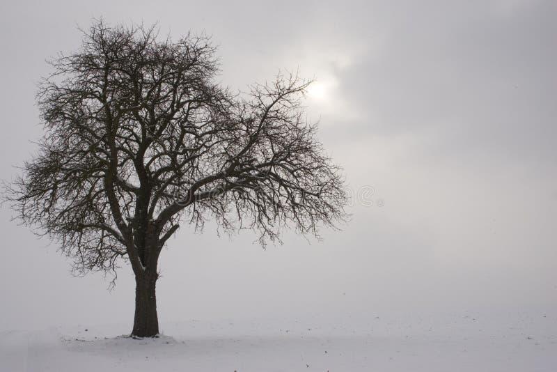 Ein Zweig ergreift zur Sonne stockfoto