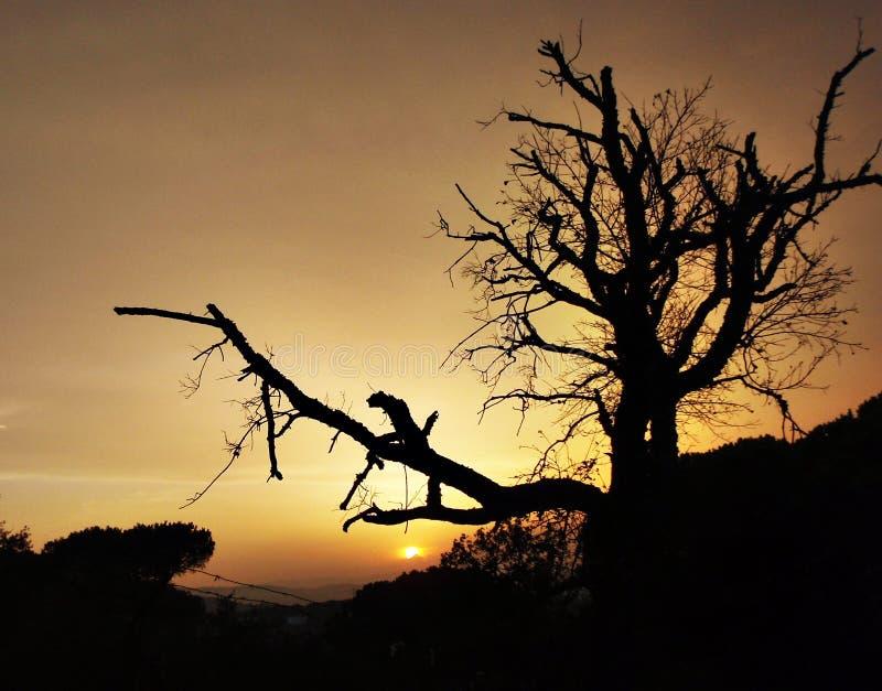 Einbruch der Nacht Calella stockfotografie