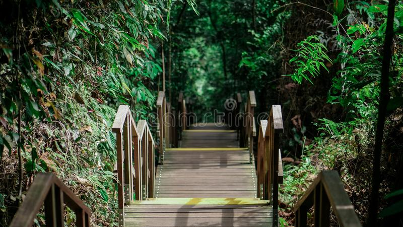 Eindeloze houten trap in de wildernis van Singapore royalty-vrije stock foto's