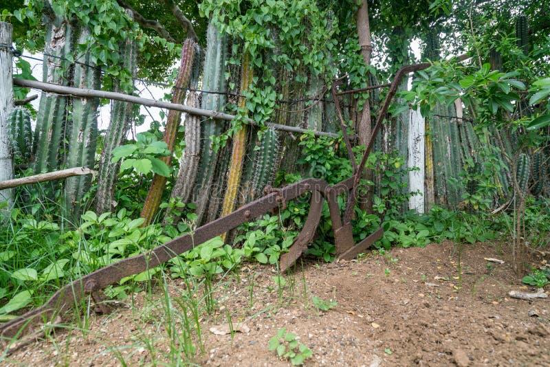 Eine alte Sklavenhütte - Kaktuszaun Curacao Views lizenzfreie stockfotos