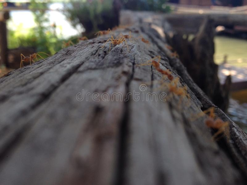 Eine Ameise lizenzfreie stockfotos