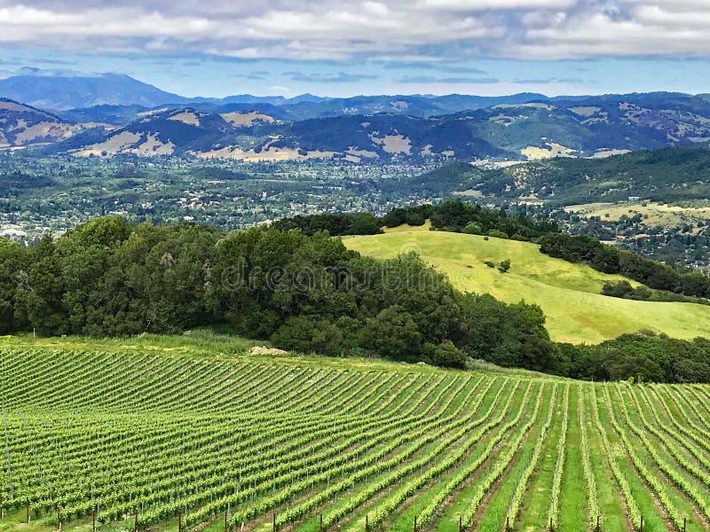 Eine Ansicht über die Hügel und die Weinberge von Sonoma County, Kalifornien stockfotografie